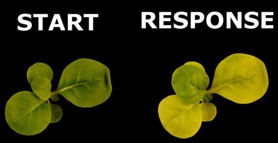 Bomb-Detecting Plants