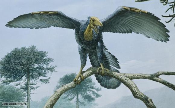 Archaeopteryx: Top 10 Bizarre Prehistoric Animals