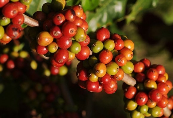 Coffee Rusts Divests Central America