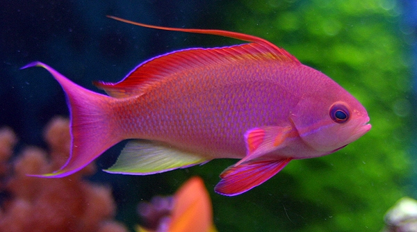 beautiful and colorful fish