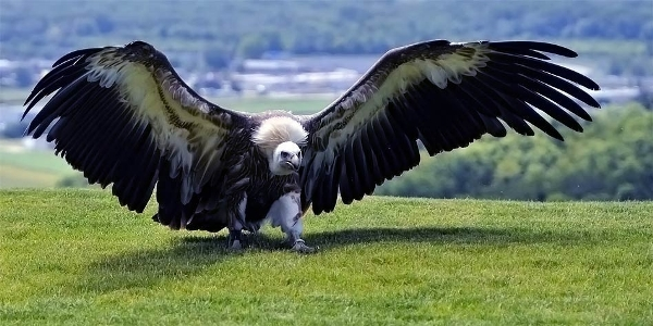dangerous prehistoric birds