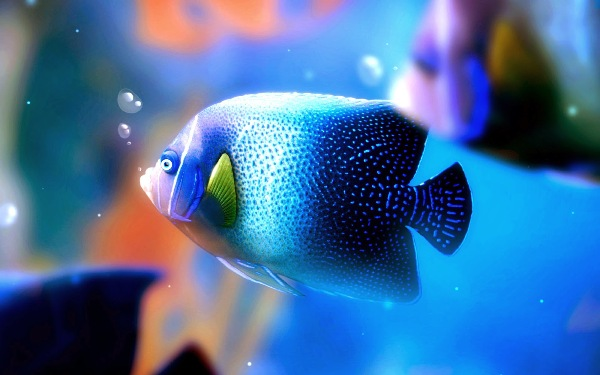 beautiful and colorful fishes